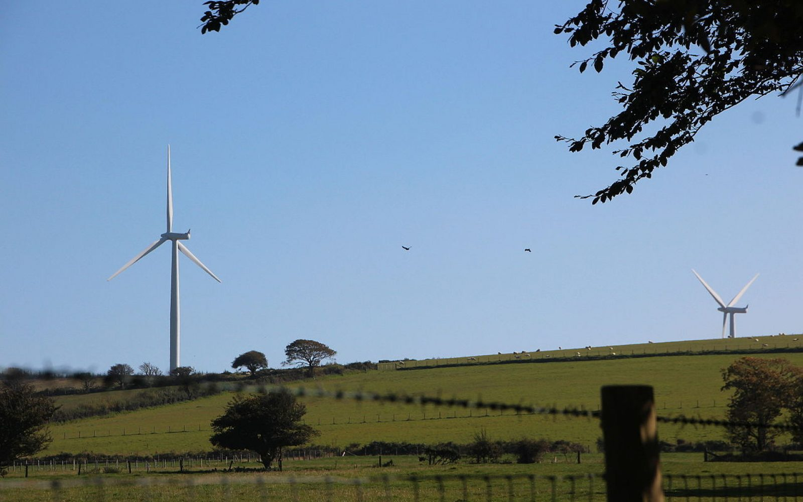 Pencader Wind Farm in Carmarthenshire, Wales. Image: Takver (WikiCommons).